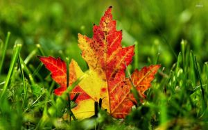 29278-leaf-1920x1200-nature-wallpaper