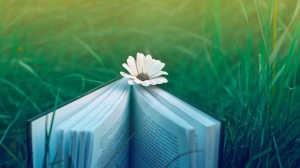 Book HD Desktop Background