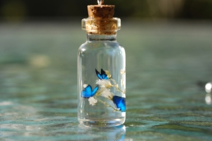 blue-butterflies-in-bottle-328168