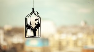 10597-bird-cage-1920x1080-artistic-wallpaper